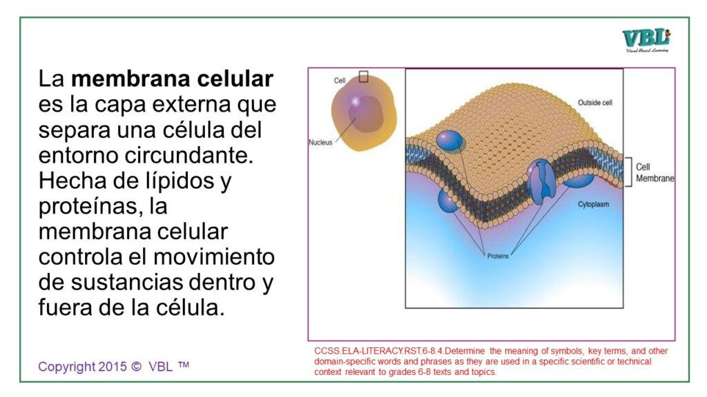 Cell Process Spanish