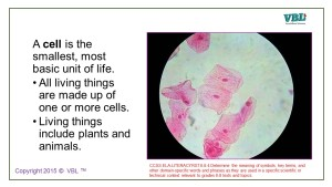 Plant-and-Animal-Cells-1-300x169