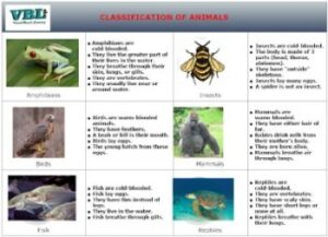 CLASSIFICATION-OF-ANIMALS-preview-350x253