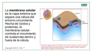 Cell Process Spanish 12